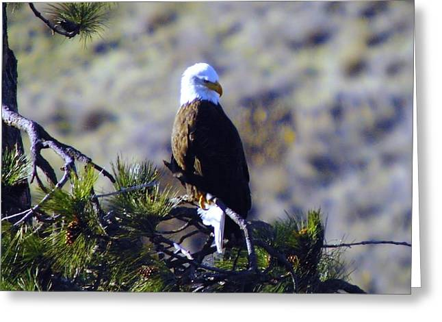 An Eagle In The Sun Greeting Card by Jeff Swan