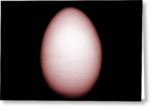 Shell Texture Greeting Cards - An Egg Greeting Card by Nth Alien