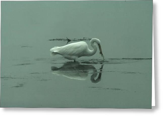 Feeding Birds Greeting Cards - An Egret Feeding Greeting Card by Jeff  Swan