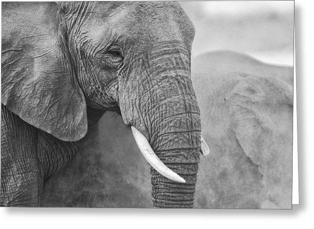 Full Body Greeting Cards - An elephant never forgets Greeting Card by Paul W Sharpe Aka Wizard of Wonders