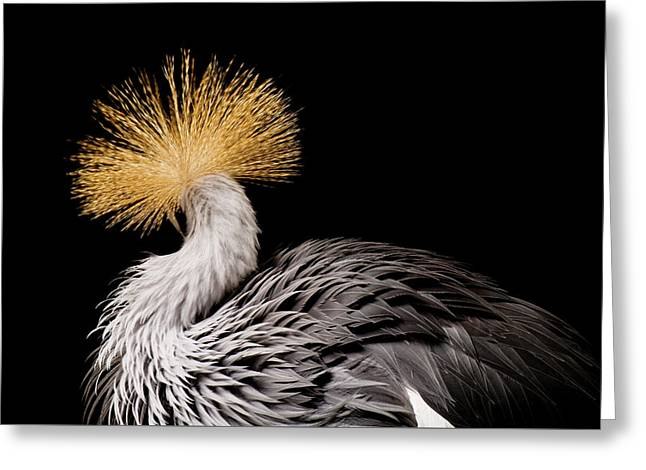 An Endangered East African Crowned Greeting Card by Joel Sartore