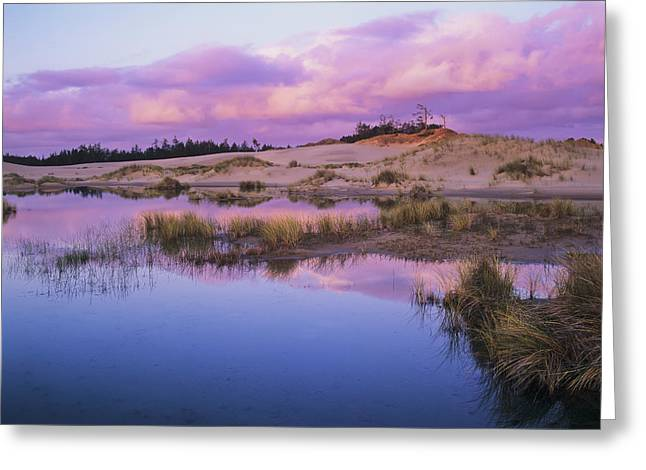 An Ephemeral Pool Reflects The Morning Greeting Card by Robert L. Potts