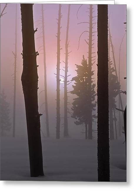 An Etheral Winter Forest Sunrise Greeting Card by Leland D Howard