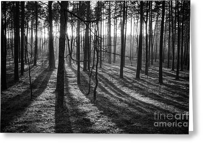 Igor Baranov Greeting Cards - An evening in the forest Greeting Card by Igor Baranov