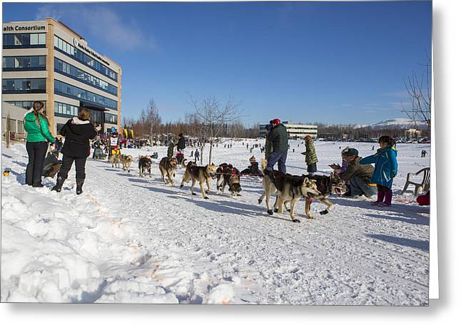 Dog Sled Racing Greeting Cards - An Iditarod Racer in Anchorage Greeting Card by Tim Grams