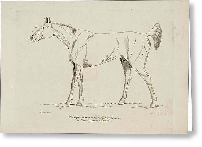 An Illustration Of A Horse Greeting Card by British Library