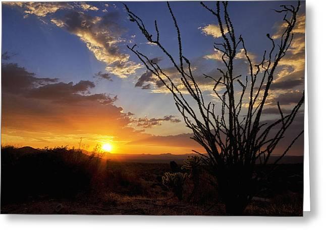 Ocotillo Cactus Greeting Cards - An Ocotillo Sunset Greeting Card by Saija  Lehtonen