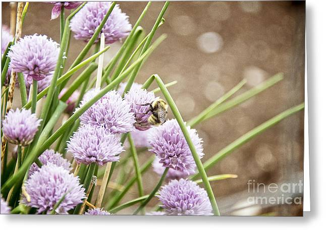 Foliage Fragrance Greeting Cards - Lilac dream Greeting Card by Ivy Ho