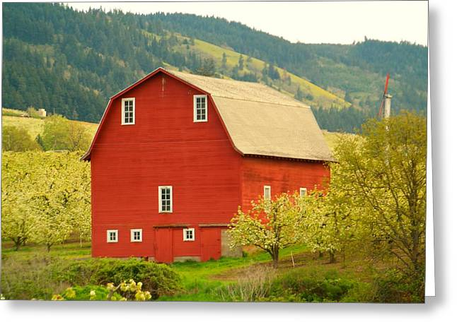 Old Barns Greeting Cards - An Old Barn In Odell Oregon Blossoms Greeting Card by Jeff  Swan