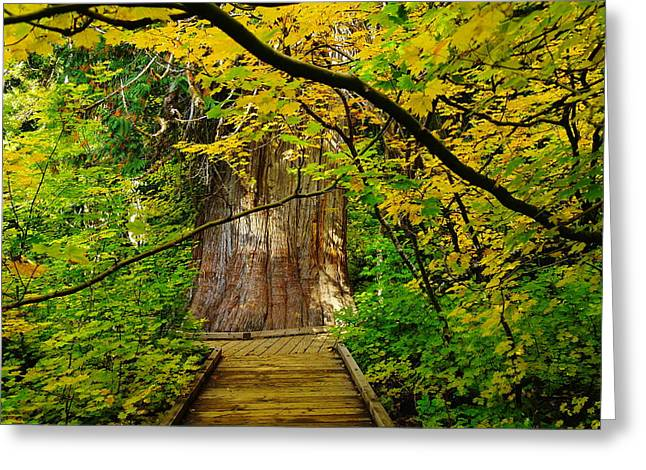 AN OLD GROWTH DOUGLASS FUR IN THE GROVE OF THE PATRIARCHES MT RAINER NATIONAL PARK Greeting Card by Jeff  Swan