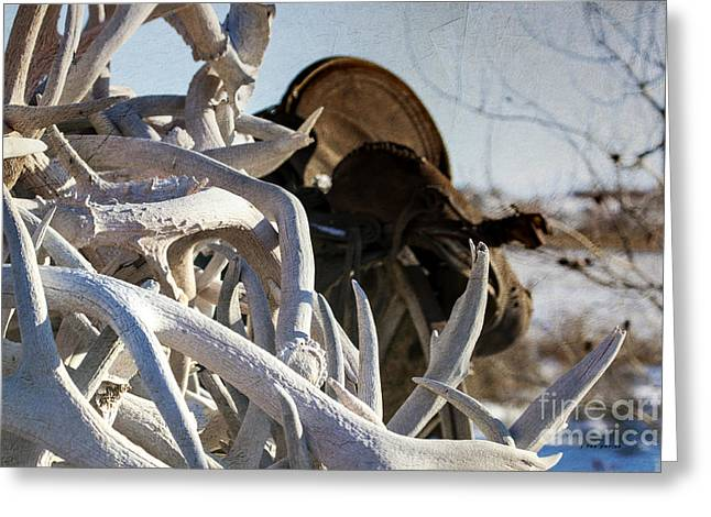 Bone Pile Greeting Cards - An Old Saddle and Some Antlers Greeting Card by Janice Rae Pariza