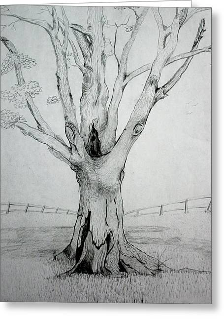 Tree Roots Drawings Greeting Cards - An Old Tree Greeting Card by Stacy C Bottoms