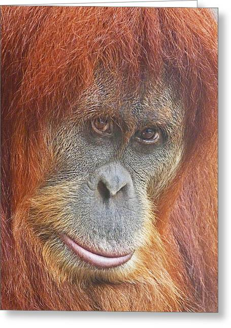 Sumatran Orang-utan Greeting Cards - An Orangutan Observing You Greeting Card by Margaret Saheed