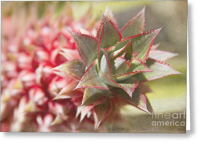 Ananas Greeting Cards - Ananas Comosus - Pink Ornamental Pineapple Greeting Card by Sharon Mau