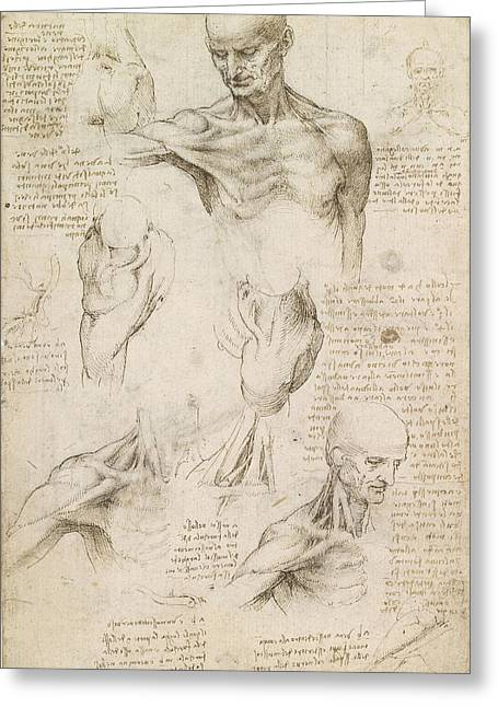 Anatomical Drawings Greeting Cards - Anatomical Drawing of Shoulder and Neck Greeting Card by Leonardo da Vinci