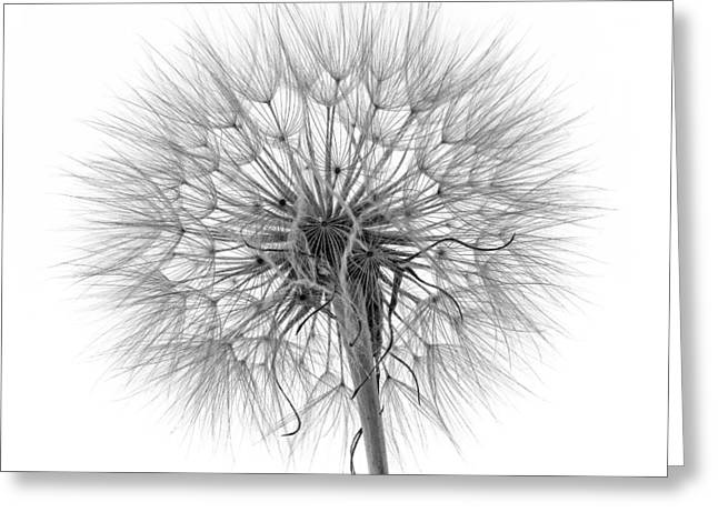 White Beard Greeting Cards - Anatomy of a Weed monochrome Greeting Card by Steve Harrington