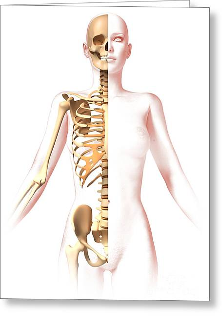 Three-quarter Length Digital Greeting Cards - Anatomy Of Female Body With Skeleton Greeting Card by Leonello Calvetti