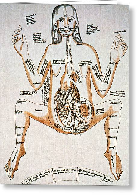 Pregnancy Greeting Cards - ANATOMY: PREGNANCY, 16th C Greeting Card by Granger