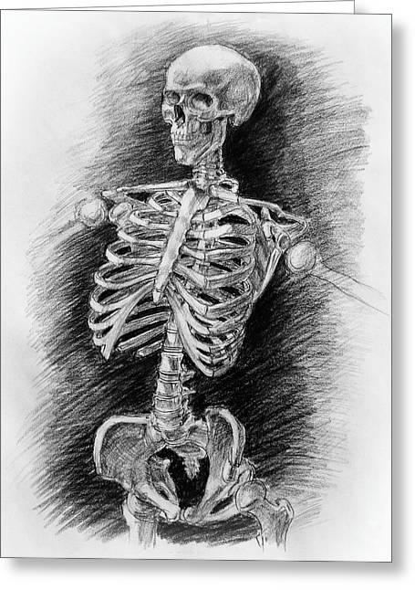Realistic Drawings Greeting Cards - Anatomy Study Mister Skeleton Greeting Card by Irina Sztukowski