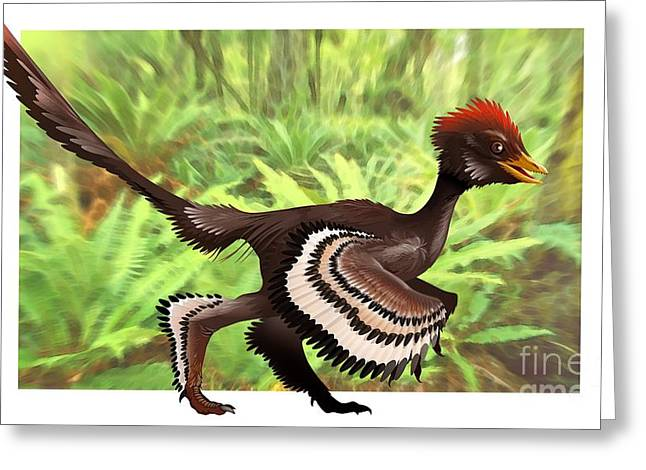 Bipedal Greeting Cards - Anchiornis Feathered Dinosaur, Artwork Greeting Card by Jose Antonio Pe??as