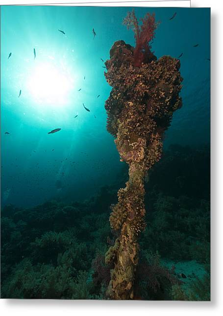 Anchor Underwater Greeting Cards - Anchor at Anemone city in the Red Sea. Greeting Card by Stephan Kerkhofs