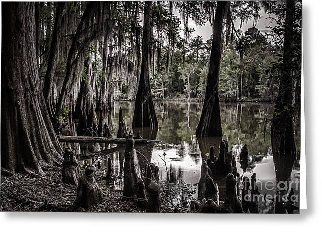 Ancien Lac Du Caddo Greeting Card by Tamyra Ayles