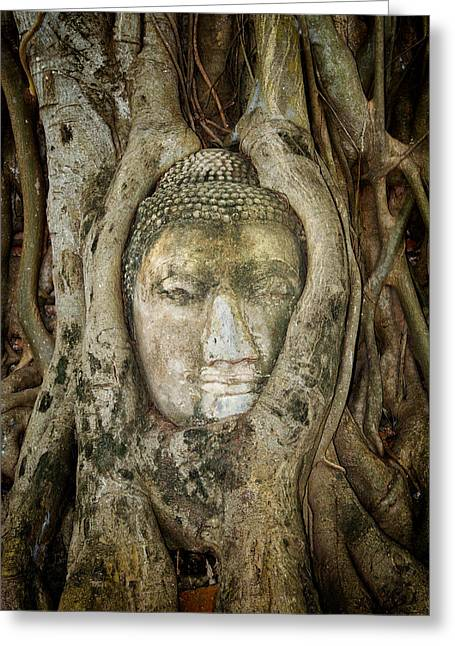 Tree Roots Photographs Greeting Cards - Ancient Buddha Entwined Within Tree Roots in Thailand Greeting Card by Artur Bogacki
