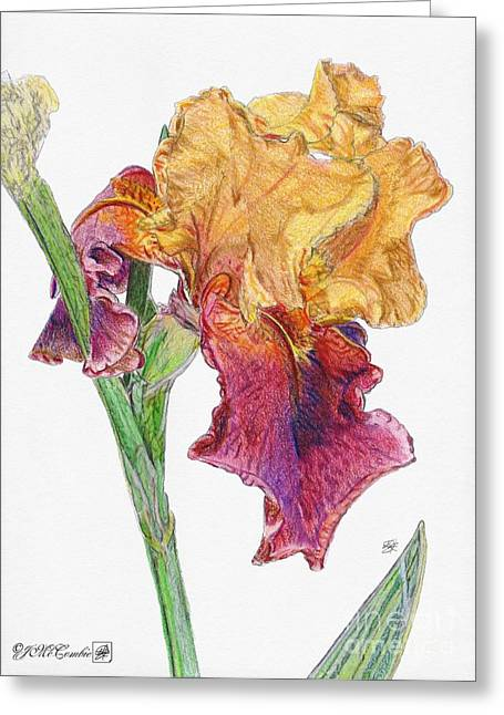 Merlot Drawings Greeting Cards - Ancient Echoes Greeting Card by J McCombie