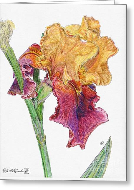 Spring Bulbs Drawings Greeting Cards - Ancient Echoes Greeting Card by J McCombie