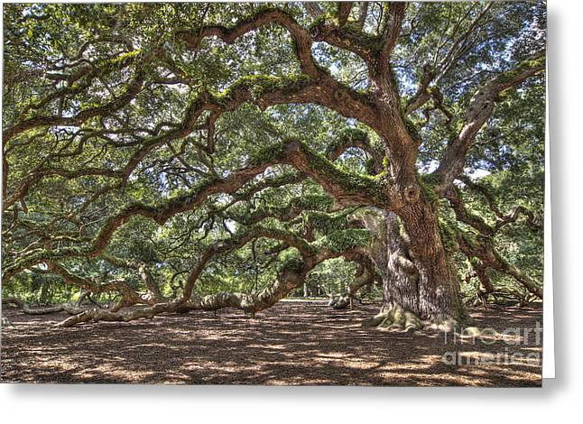 """spreading Tree"" Greeting Cards - Ancient Live Oak Tree Greeting Card by John Wollwerth"