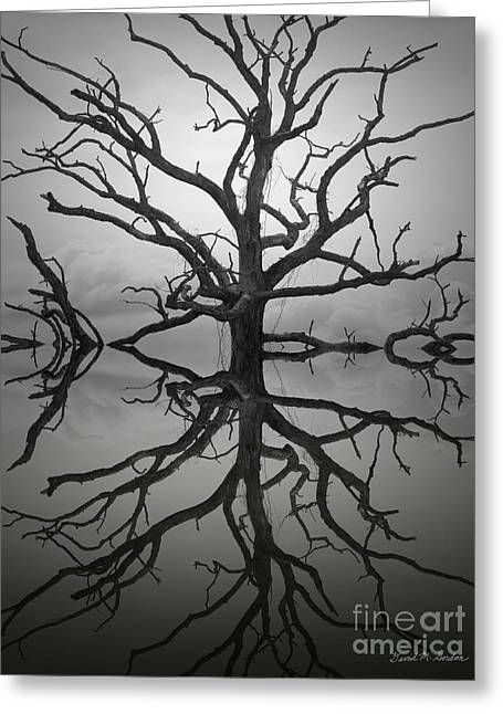 Surrealistic Images Greeting Cards - Ancient Oak Tree Montage Greeting Card by David Gordon