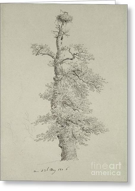 Romanticism Drawings Greeting Cards - Ancient Oak Tree with a Storks Nest Greeting Card by Caspar David Friedrich