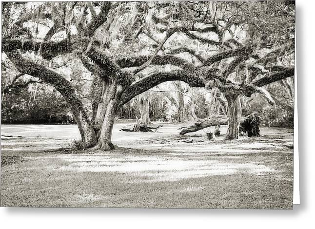 Acadian Greeting Cards - Ancient Oaks Greeting Card by Scott Pellegrin