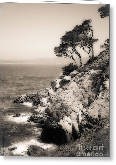 Point Lobos Greeting Cards - Ancient One Greeting Card by Lois Farrington