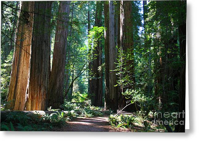 Dappled Light Greeting Cards - Ancient Ones Greeting Card by Jeanette French