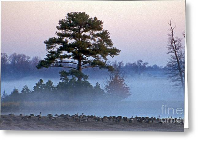Photos Of Birds Greeting Cards - Ancient Pine Greeting Card by Skip Willits