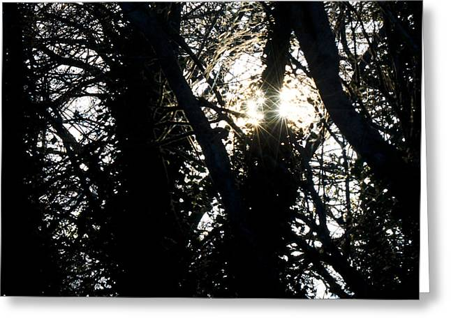 Winter Light Through The Trees Greeting Cards - Ancient Ritual Greeting Card by Steven Poulton
