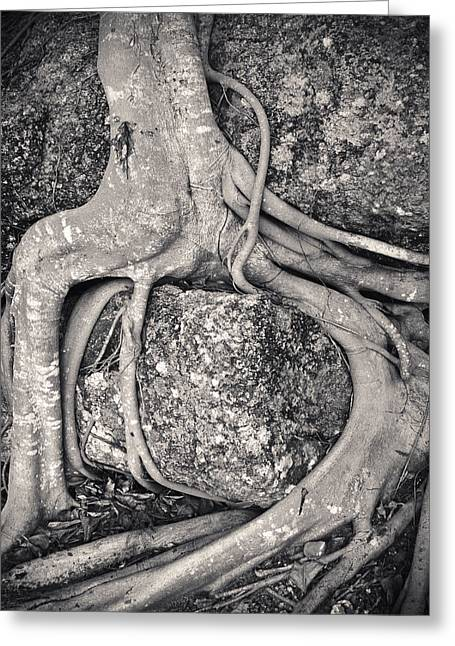 Ancient Roots Greeting Card by Adam Romanowicz