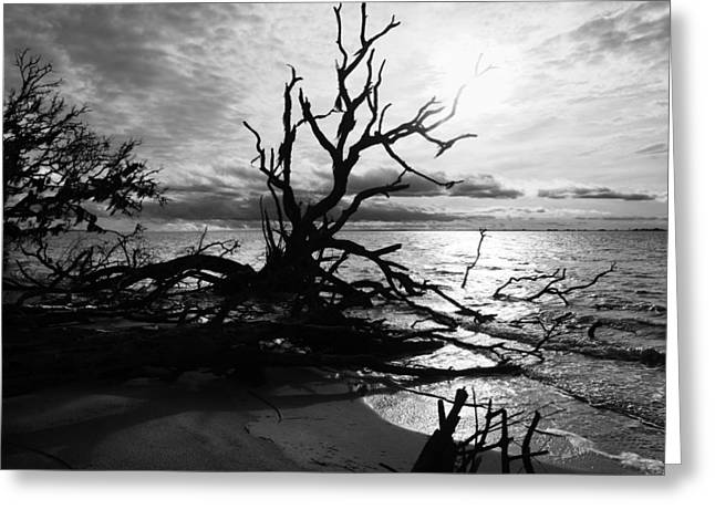 Driftwood Beach Greeting Cards - Ancient Sacrifice  Greeting Card by Betsy A  Cutler