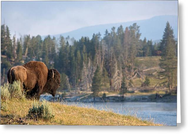 Tatanka Greeting Cards - Ancient Soul Greeting Card by Sandy Sisti