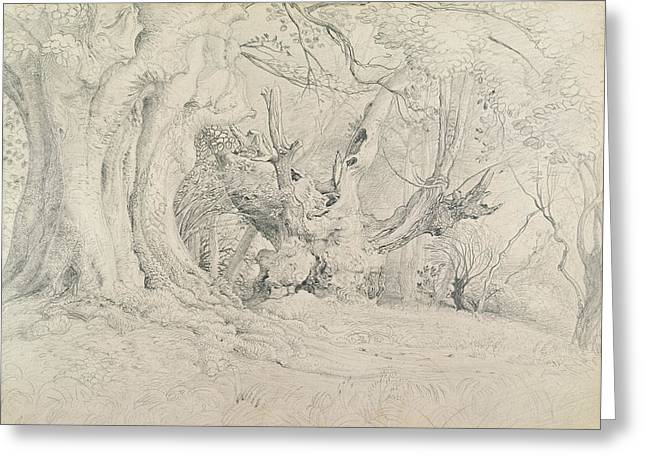 Old Tree Greeting Cards - Ancient Trees Lullingstone Park Greeting Card by Samuel Palmer