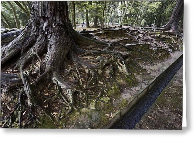 ANCIENT TREES of NARA PARK Greeting Card by Daniel Hagerman