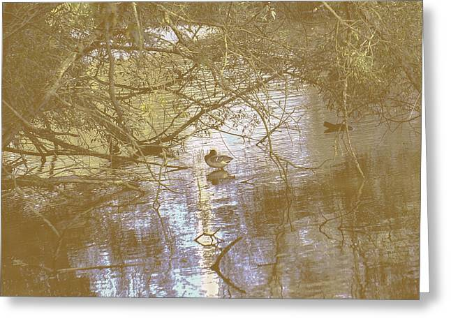 Photohraphy Greeting Cards - And 2- Mallard eitting on a log Greeting Card by Leif Sohlman