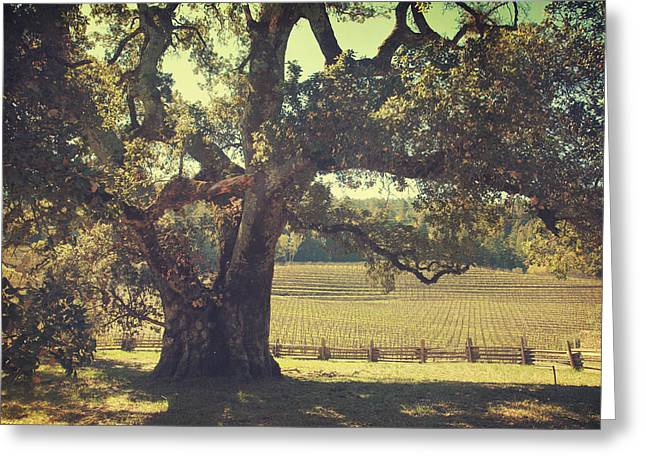Gnarled Greeting Cards - And I Smiled to Myself Greeting Card by Laurie Search