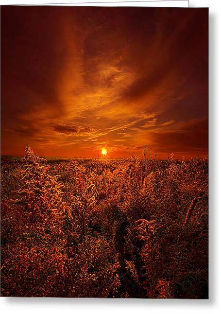 Fall Trees Greeting Cards - And The Sun Rose Yet Again Greeting Card by Phil Koch