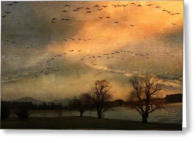 Kathy Jennings Photography Greeting Cards - And They Flew Away Greeting Card by Kathy Jennings