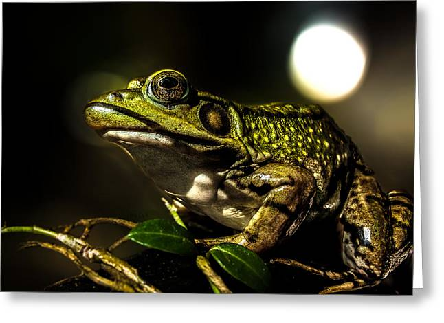 Frogs Photographs Greeting Cards - And This Frog Can Sing Greeting Card by Bob Orsillo