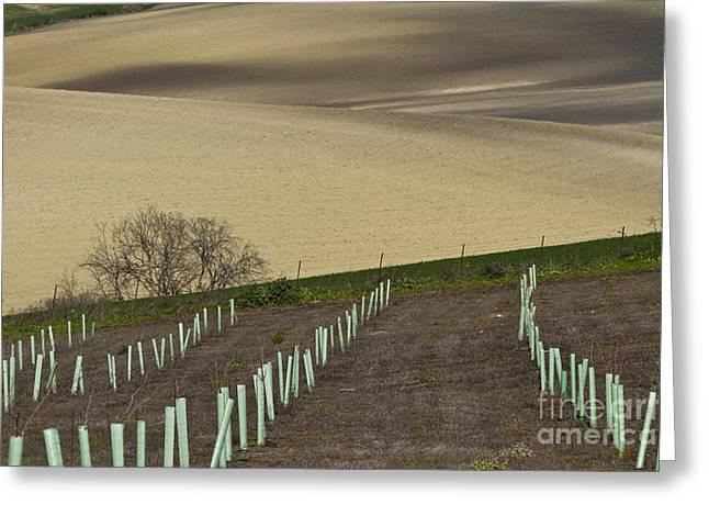 Heiko Koehrerwagner Greeting Cards - Andalusian Farmland Series-4 Greeting Card by Heiko Koehrer-Wagner