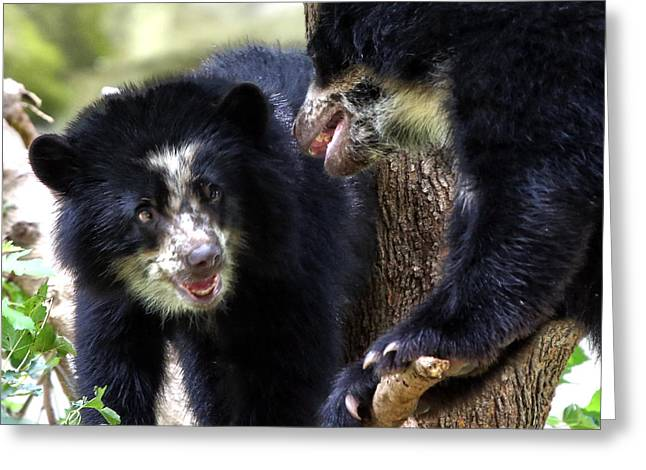 Andean Greeting Cards - Andean Bears Greeting Card by Mitch Cat