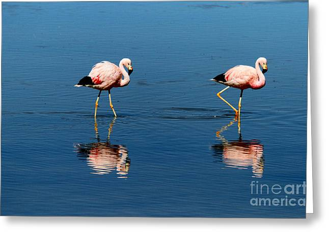 Andean Greeting Cards - Andean Flamingos Greeting Card by James Brunker